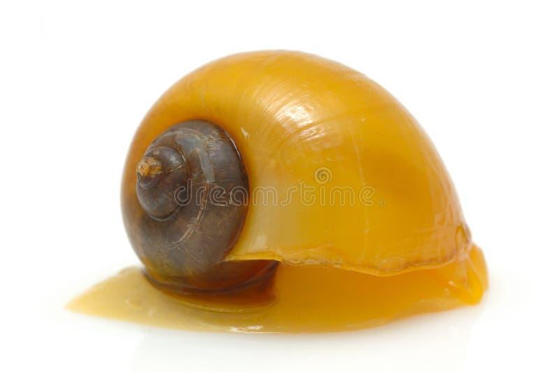 Escargot jaune photo stock