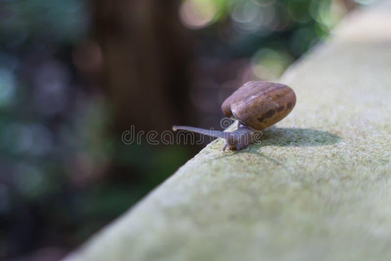 Escargot passant la route photographie stock libre de droits