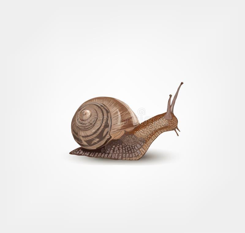 Escargot réaliste d'isolement sur le fond blanc - vecteur illustration de vecteur