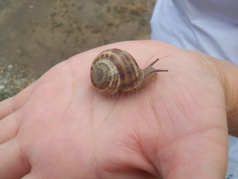 Escargot se reposant sur une main photo libre de droits