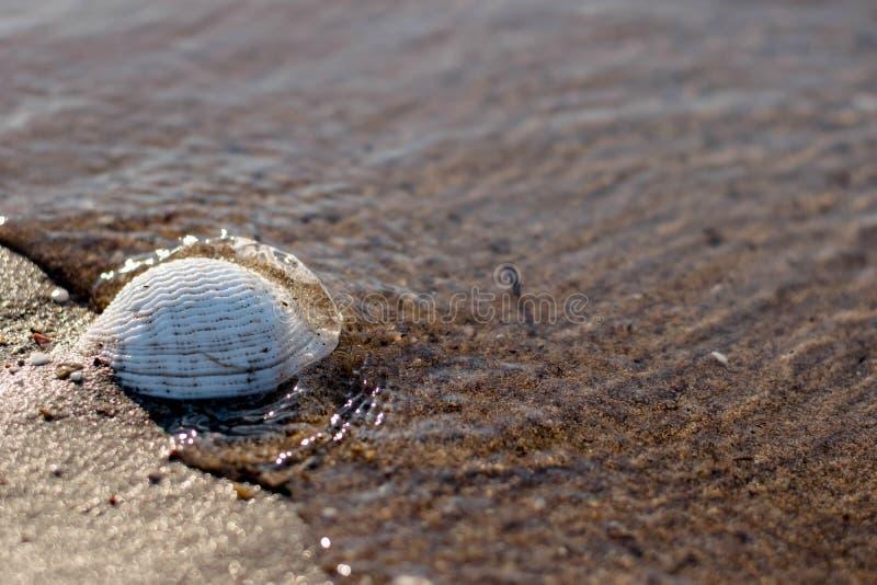 escargot simple Pacifique images libres de droits