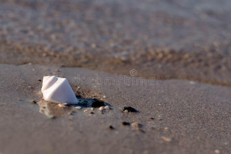 escargot simple Pacifique photos libres de droits