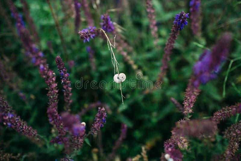 Escargot sur l'herbe photos libres de droits