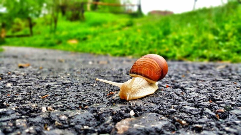 Escargot sur la route photographie stock