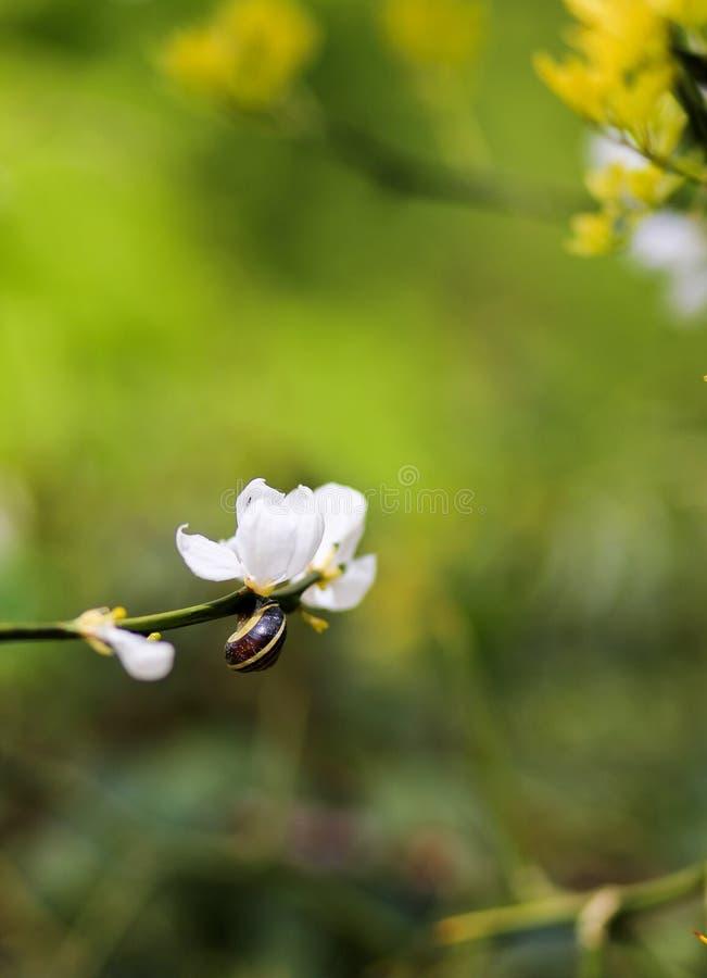Escargot sur le brunch avec la fleur blanche sur le fond vert photographie stock