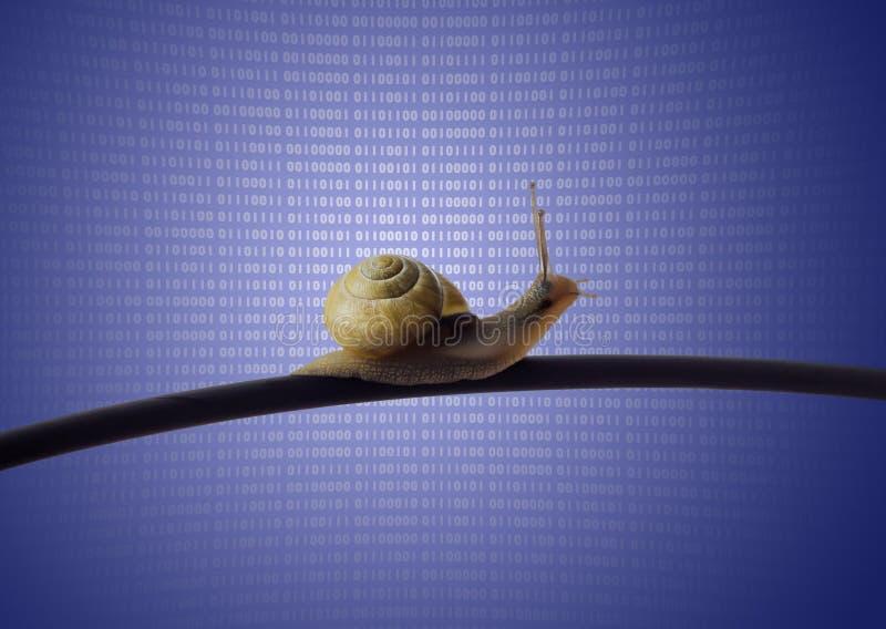 Escargot sur le câble d'Ethernet images libres de droits
