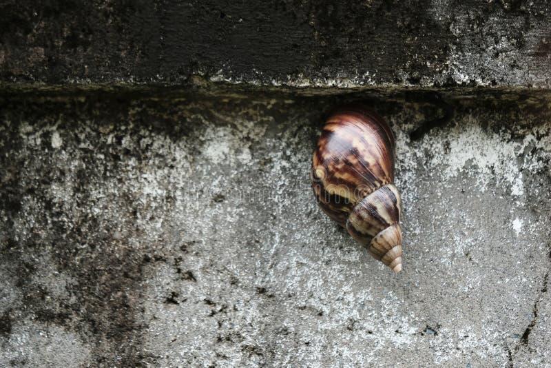 Escargot sur le mur pour le fond image libre de droits