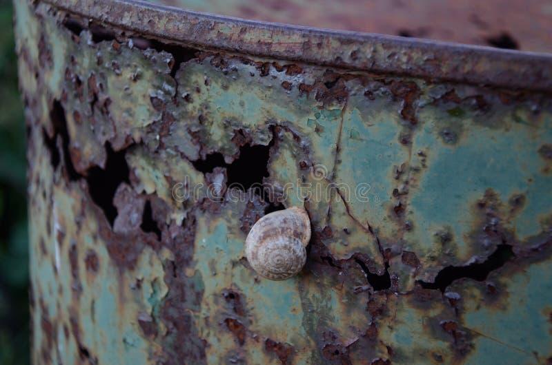 Escargot sur un baril rouillé images stock