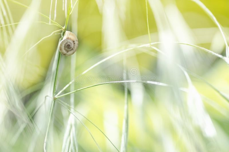 Escargot sur un fond naturel de tige dans la tache floue photos stock