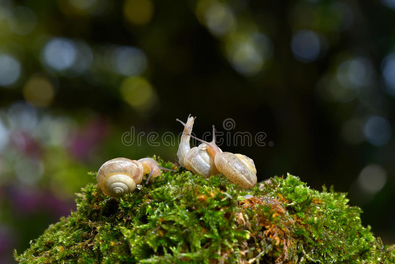 Escargot trois photo libre de droits
