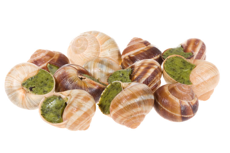 Escargots stockfotografie