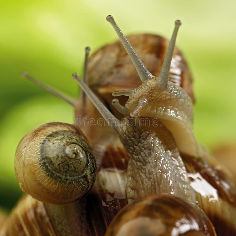 Escargots image stock