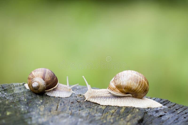 Escargots photos stock