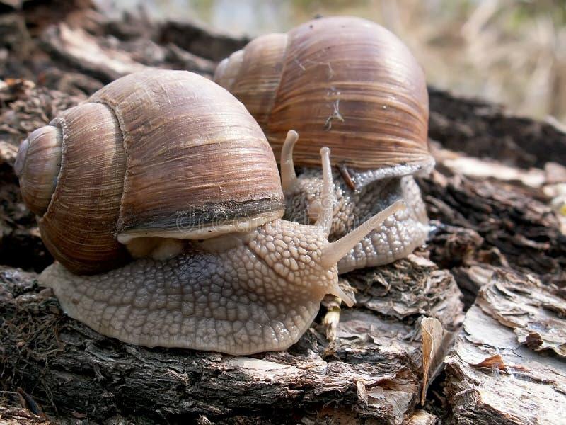 Download Escargots image stock. Image du bleu, cheville, élever - 728447