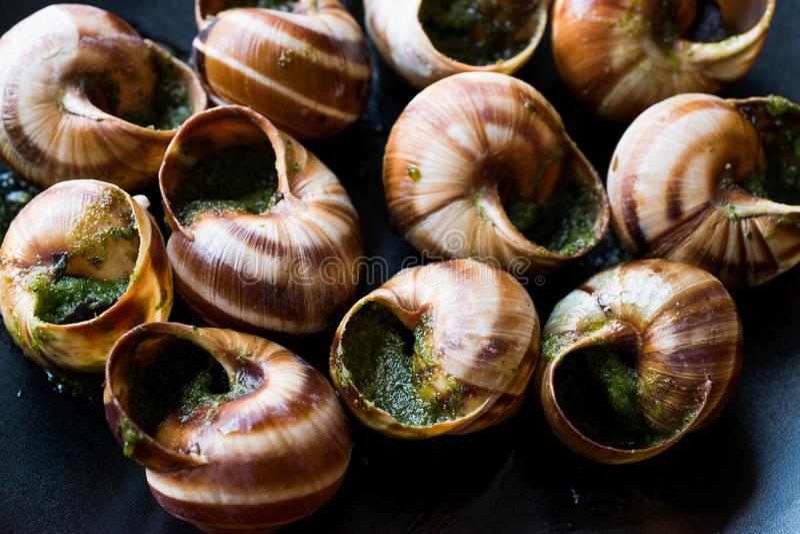 Escargots de der Burgund - Schnecken-Lebensmittel mit Kräuterbutter, Frankreich-Feinschmeckerteller lizenzfreies stockbild