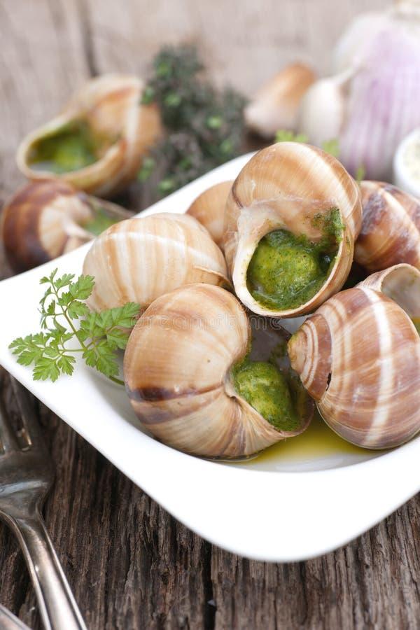 Escargots de vigne photographie stock