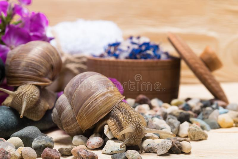 Escargots et choses pour le salon de station thermale, plan rapproché photographie stock