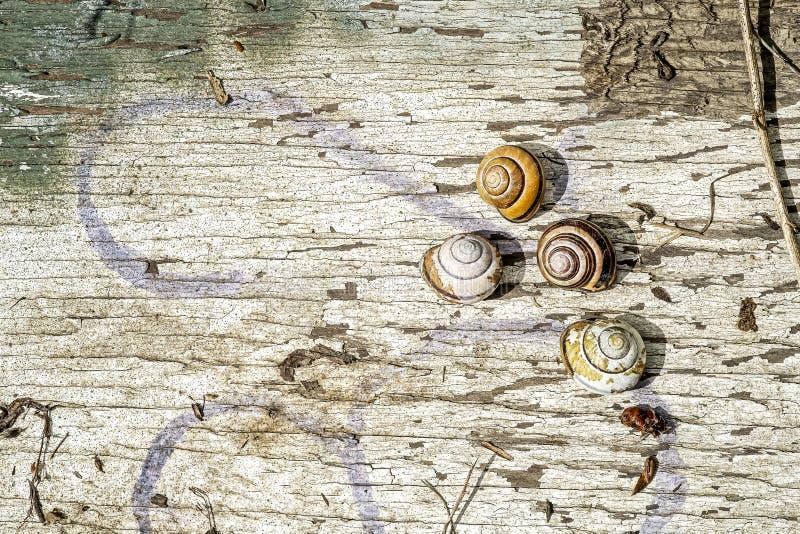 Escargots sur le contreplaqué peint dans la forêt photo stock