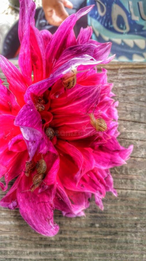 Escargots sur une fleur images stock