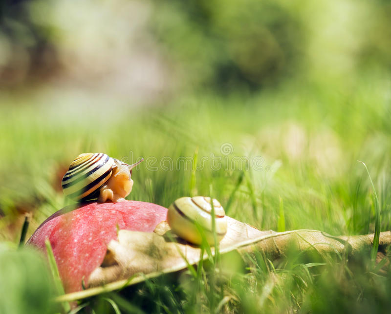 Escargots sur une pomme photographie stock