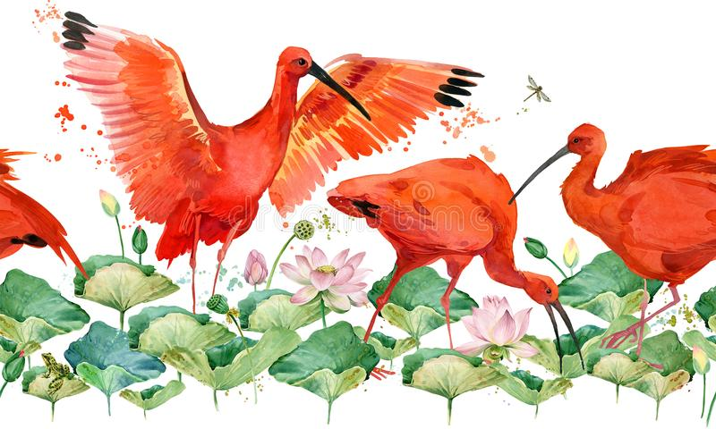 Escarlata ibis modelo inconsútil de la acuarela tropical del pájaro libre illustration
