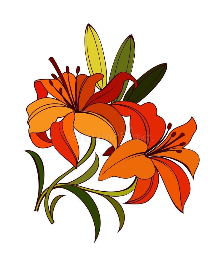 Escarlate da flor do lírio ilustração do vetor