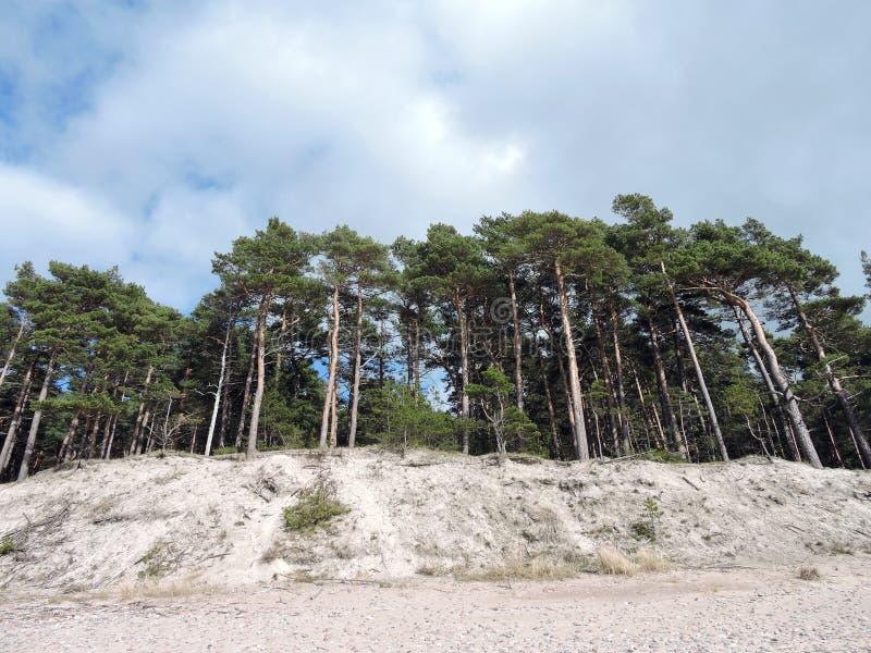Escarpa en la costa de mar Báltico, Lituania imágenes de archivo libres de regalías