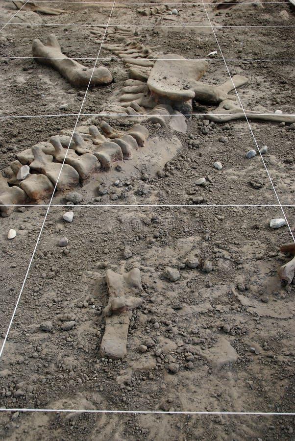 Escavação da arqueologia imagem de stock
