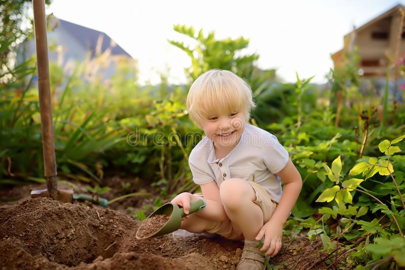 Escavação do rapaz pequeno que trabalha com pá no quintal no dia ensolarado do verão Ajudante pequeno da mamã imagens de stock