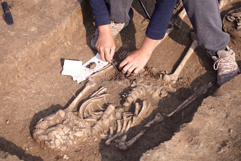 Escavações Archaeological O arqueólogo em um processo do escavador, pesquisando o túmulo, os ossos humanos, a peça do esqueleto e imagem de stock