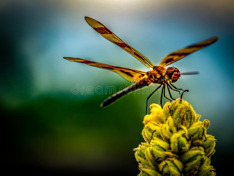 Escavando Bug Ocupado para Alimentos fotografia de stock royalty free