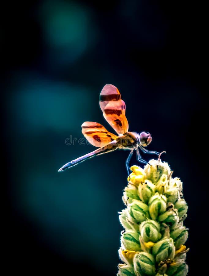 Escavando Bug Ocupado para Alimentos fotografia de stock