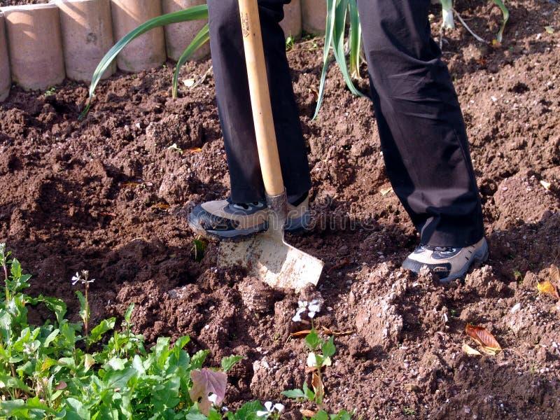 Escavando o jardim fotos de stock