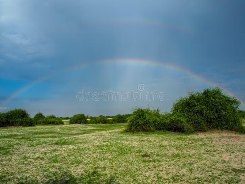 Escena asombrosa del arco iris doble en fondo del espacio de la copia del cielo azul sobre la arena, la hierba y el árbol natural imagenes de archivo