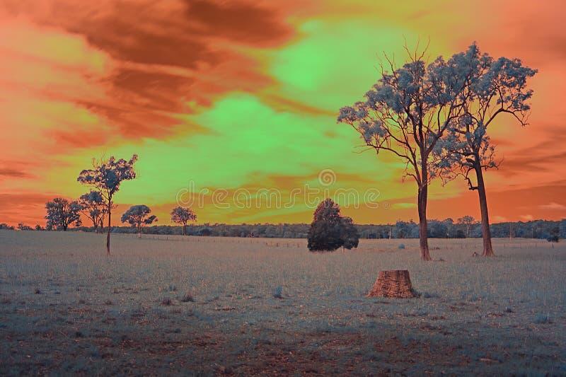 Escena australiana del interior con un cielo bronceado foto de archivo libre de regalías