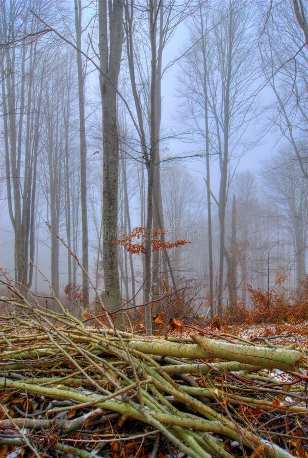 Escena brumosa del bosque fotografía de archivo
