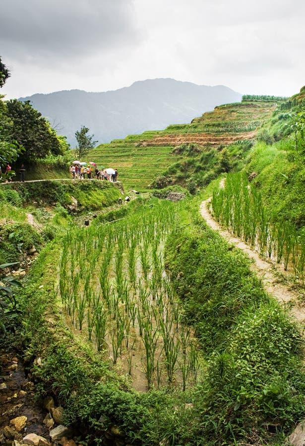 Escena china en los campos colgantes hermosos del arroz en Longsheng Pueblo de Tian Tou Zhai en terraza del arroz del longji en G fotografía de archivo