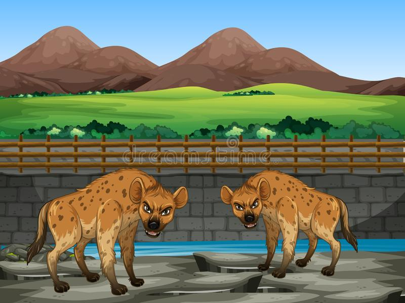 Escena con hiena en el zoológico foto de archivo