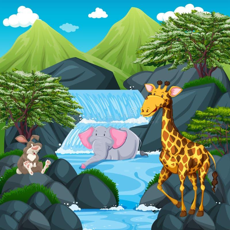 Escena con los animales salvajes en la cascada ilustración del vector