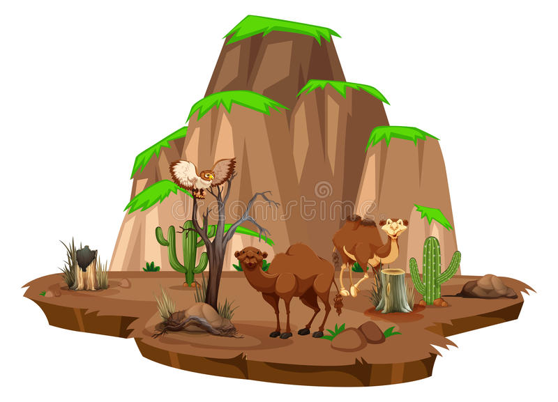 Escena con los camellos y el búho en el campo stock de ilustración