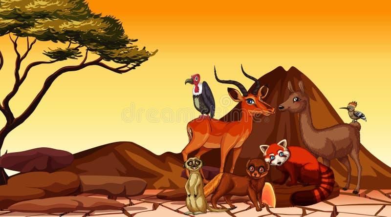 Escena con muchos animales en el campo fotografía de archivo libre de regalías