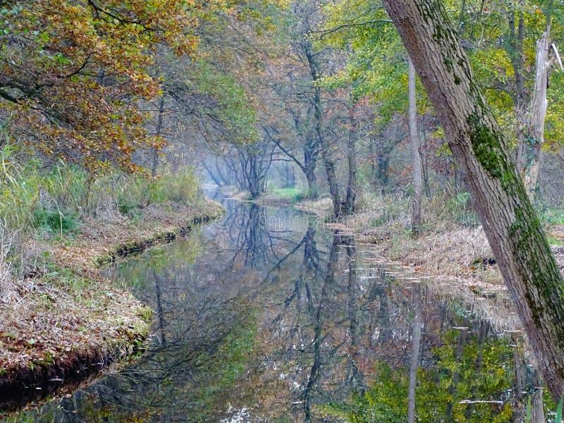 Escena de hadas de la cola de la zanja con los árboles que reflejan en el agua fotos de archivo