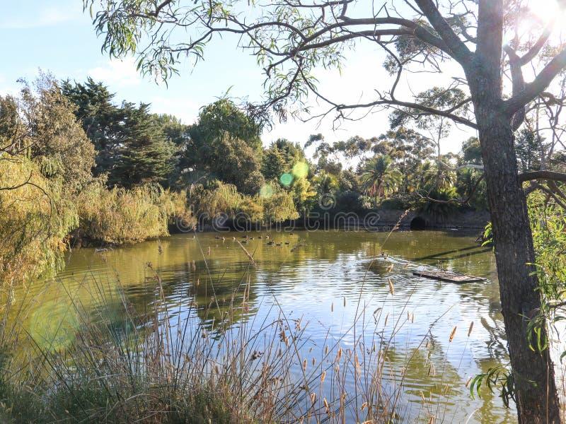 Escena de la naturaleza de árboles, del agua y de la fauna con la llamarada de la lente fotos de archivo libres de regalías