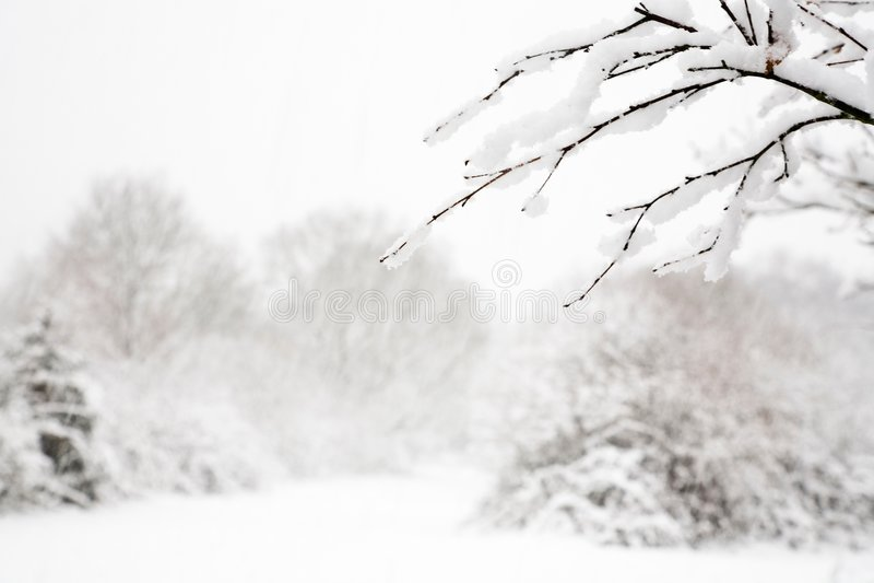 Escena de la nieve del arbolado fotografía de archivo libre de regalías