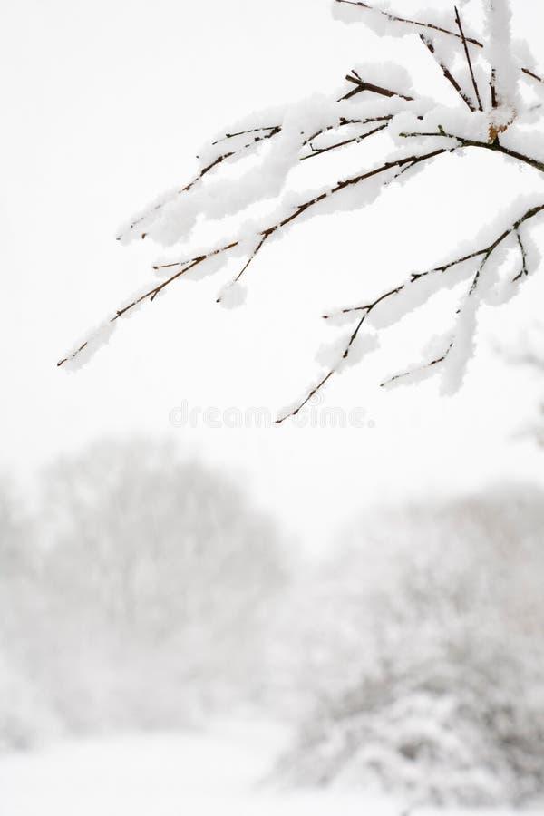 Escena de la nieve del arbolado fotos de archivo