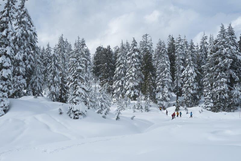Escena de la nieve del invierno con los árboles nevados en el soporte Seymour imágenes de archivo libres de regalías