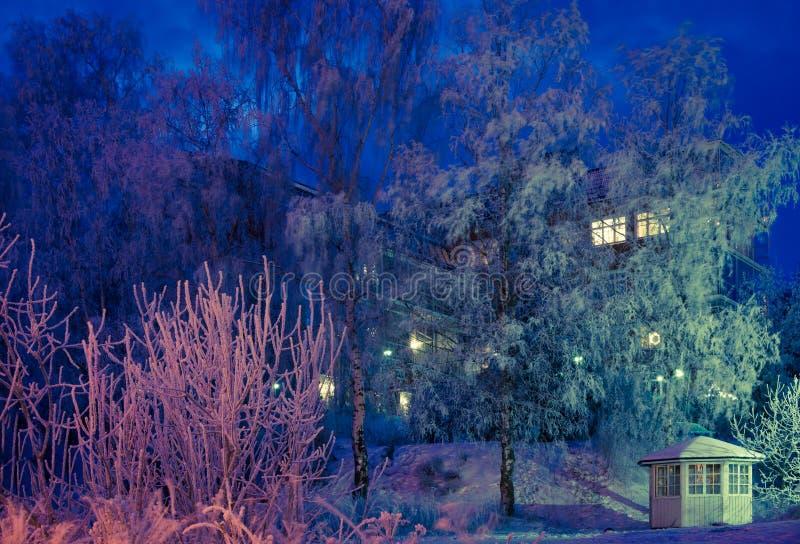 Escena de la noche del invierno foto de archivo