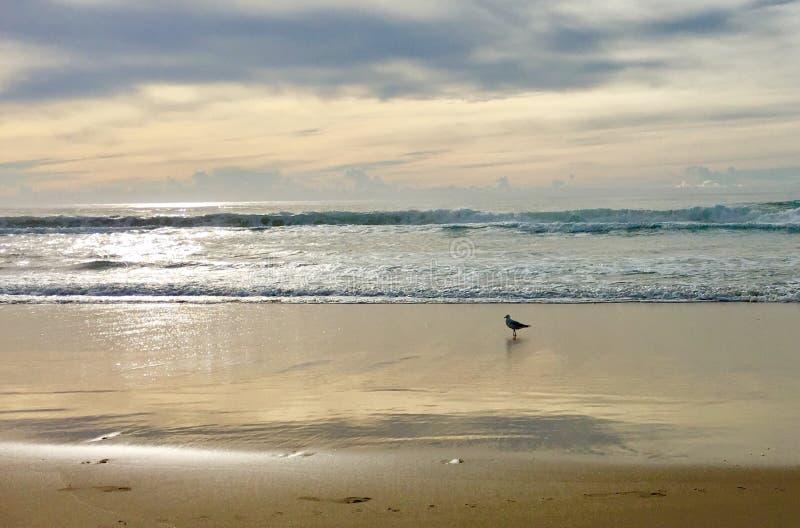 Escena de la playa de la última hora de la tarde con la gaviota fotografía de archivo libre de regalías