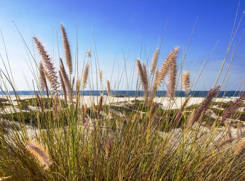 Escena de la playa con la hierba salvaje fotos de archivo