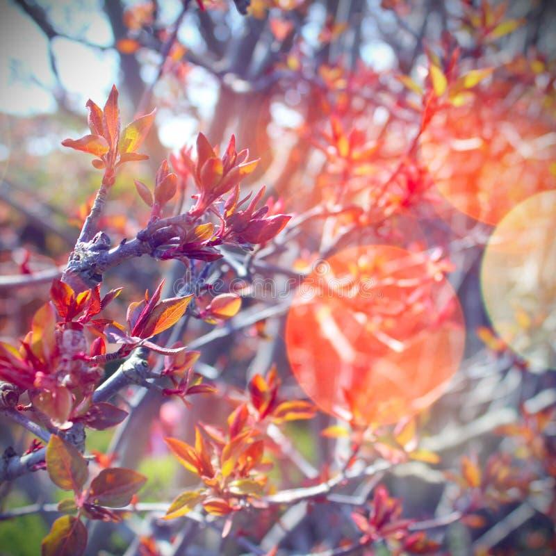 Escena de la primavera imagenes de archivo